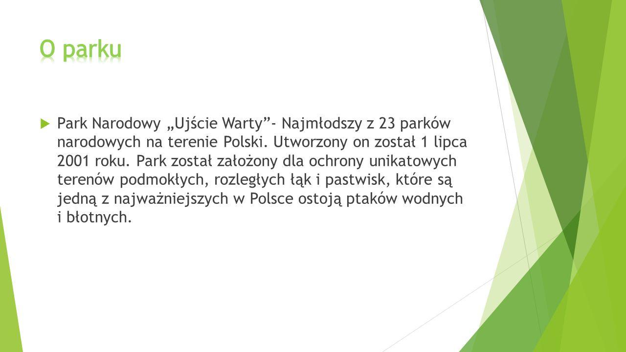 """ Park Narodowy """"Ujście Warty""""- Najmłodszy z 23 parków narodowych na terenie Polski. Utworzony on został 1 lipca 2001 roku. Park został założony dla o"""