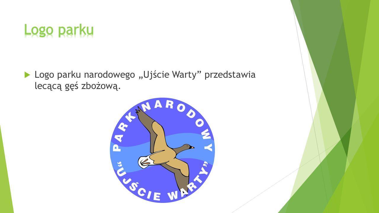 """ Logo parku narodowego """"Ujście Warty"""" przedstawia lecącą gęś zbożową."""