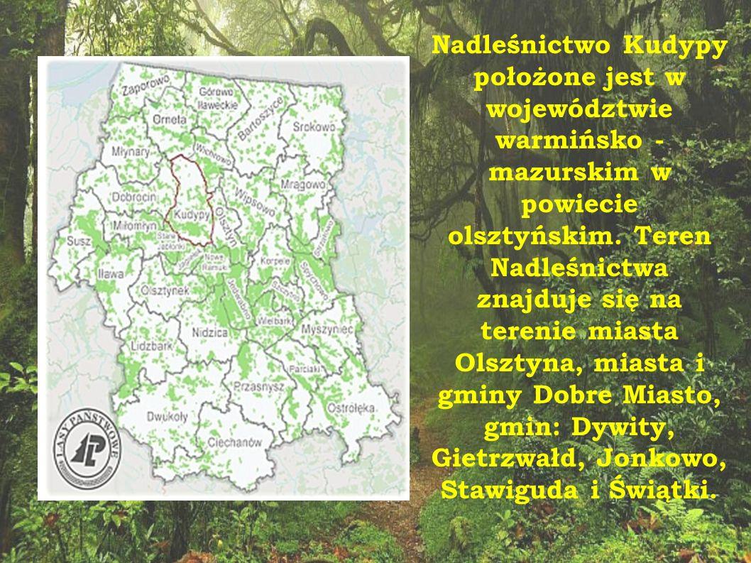 Nadleśnictwo Kudypy położone jest w województwie warmińsko - mazurskim w powiecie olsztyńskim.