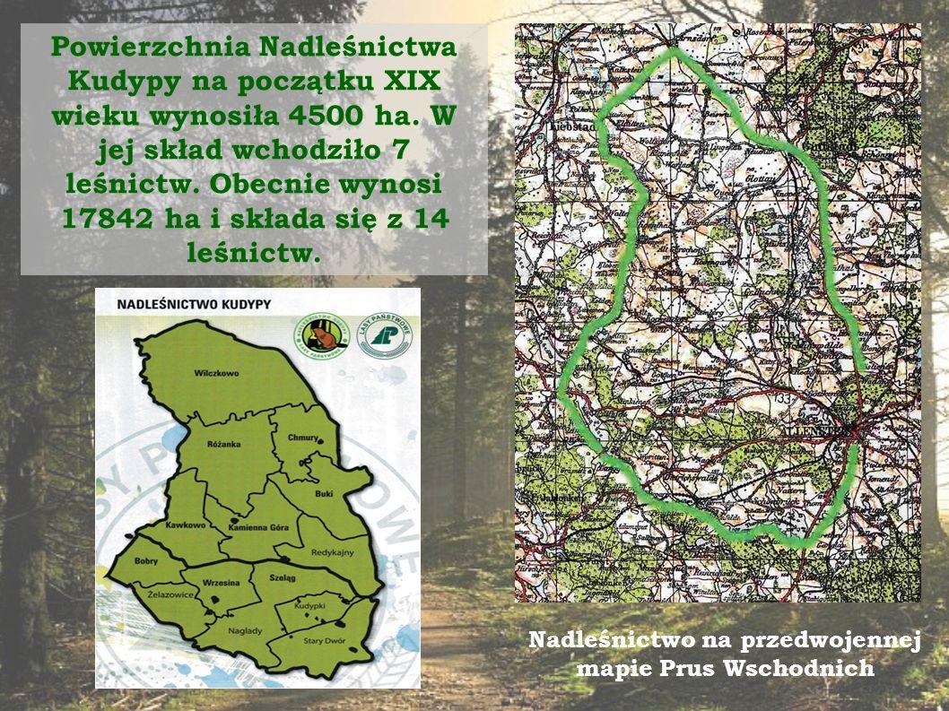 Powierzchnia Nadleśnictwa Kudypy na początku XIX wieku wynosiła 4500 ha.