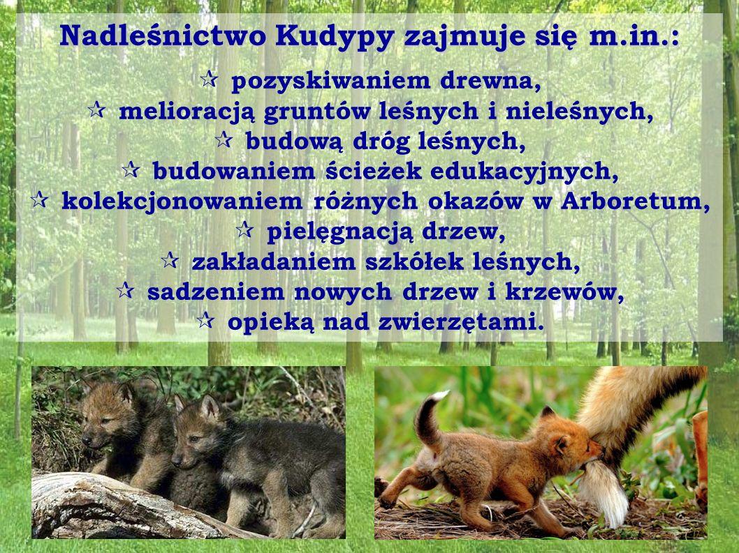 """Rezerwaty przyrody """"Kamienna Góra - został utworzony w 1995 roku na terenie gminy Jonkowo w nadleśnictwie Kudypy dla zachowania drzewostanu bukowego ze stanowiskami licznych gatunków rzadkich i chronionych."""