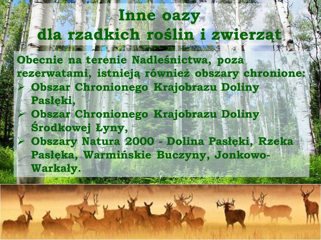 Arboretum w Kudypach W Kudypach znajduje się unikatowe miejsce przyrodnicze.