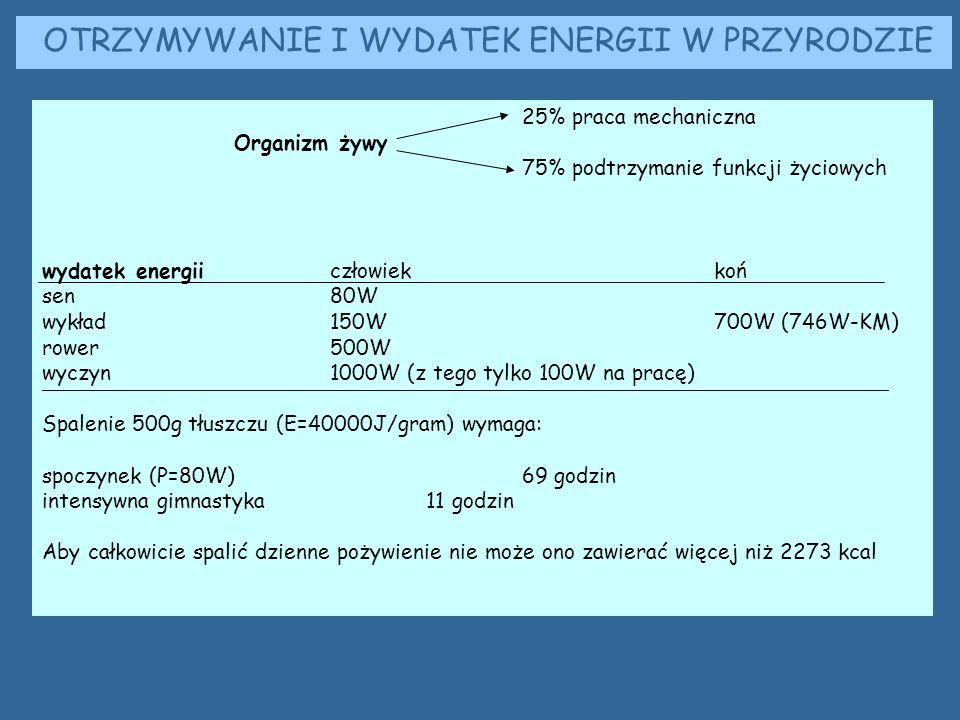 25% praca mechaniczna Organizm żywy 75% podtrzymanie funkcji życiowych wydatek energiiczłowiekkoń sen80W wykład 150W700W (746W-KM) rower500W wyczyn1000W (z tego tylko 100W na pracę) Spalenie 500g tłuszczu (E=40000J/gram) wymaga: spoczynek (P=80W)69 godzin intensywna gimnastyka11 godzin Aby całkowicie spalić dzienne pożywienie nie może ono zawierać więcej niż 2273 kcal OTRZYMYWANIE I WYDATEK ENERGII W PRZYRODZIE