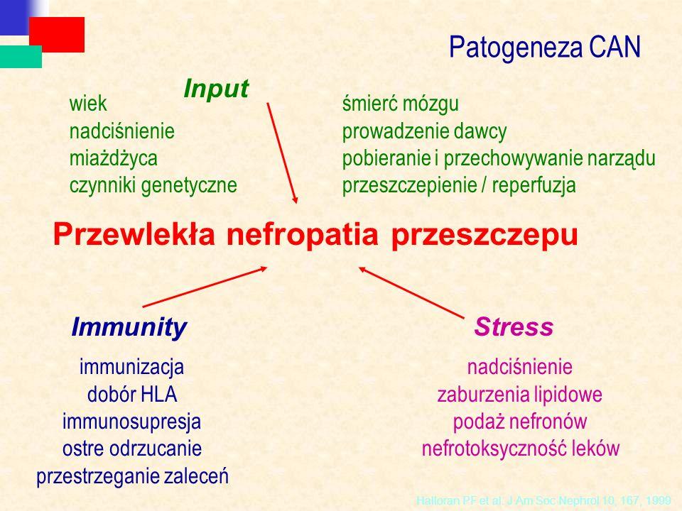 Halloran PF et al. J Am Soc Nephrol 10, 167, 1999 wiek nadciśnienie miażdżyca czynniki genetyczne Input śmierć mózgu prowadzenie dawcy pobieranie i pr