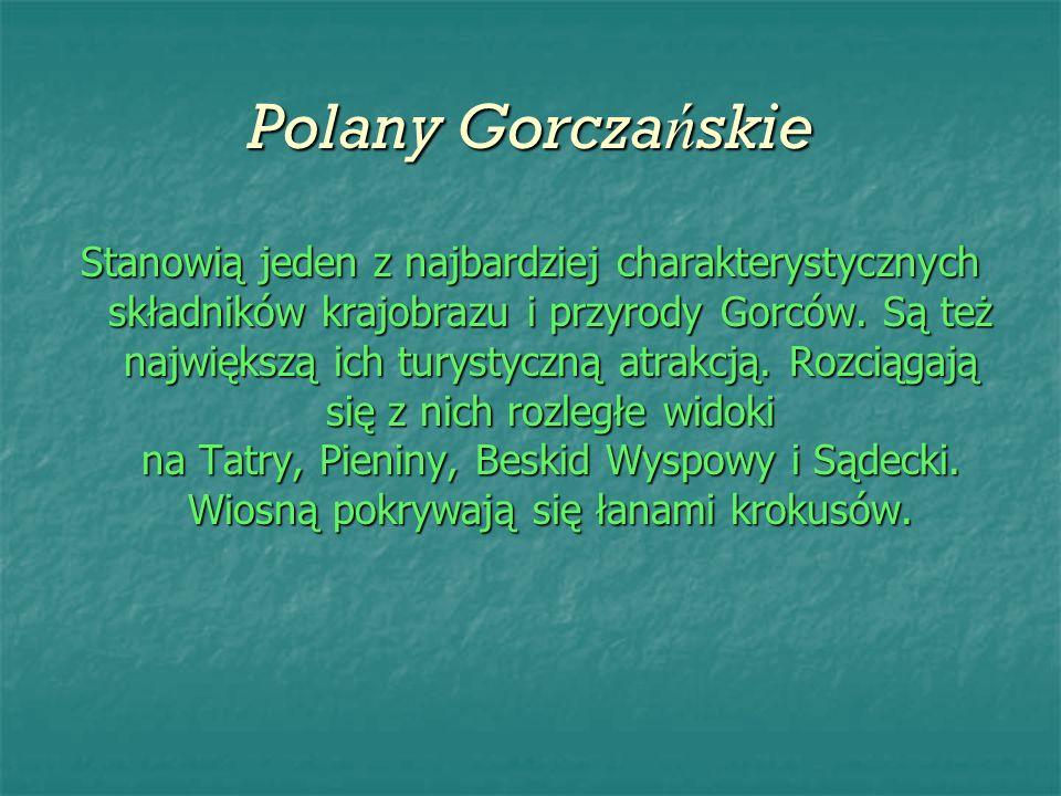Polany Gorcza ń skie Stanowią jeden z najbardziej charakterystycznych składników krajobrazu i przyrody Gorców. Są też największą ich turystyczną atrak