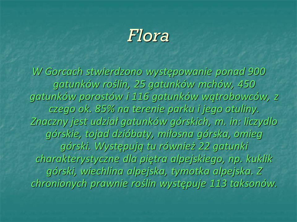 Flora W Gorcach stwierdzono występowanie ponad 900 gatunków roślin, 25 gatunków mchów, 450 gatunków porostów i 116 gatunków wątrobowców, z czego ok. 8