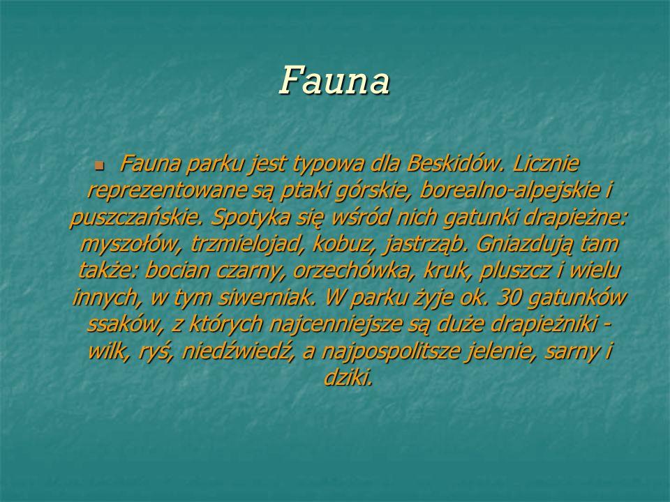 Fauna Fauna parku jest typowa dla Beskidów. Licznie reprezentowane są ptaki górskie, borealno-alpejskie i puszczańskie. Spotyka się wśród nich gatunki