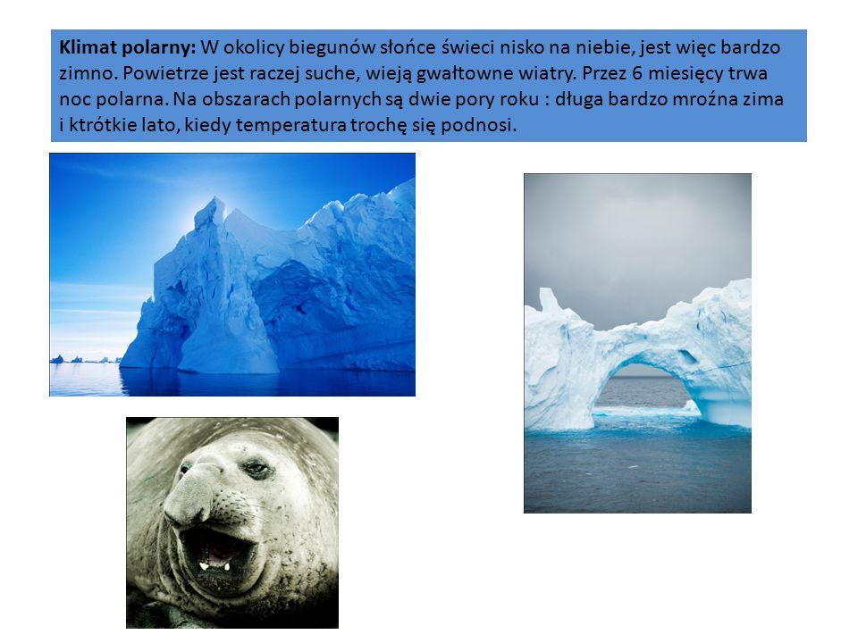 Klimat polarny: W okolicy biegunów słońce świeci nisko na niebie, jest więc bardzo zimno.