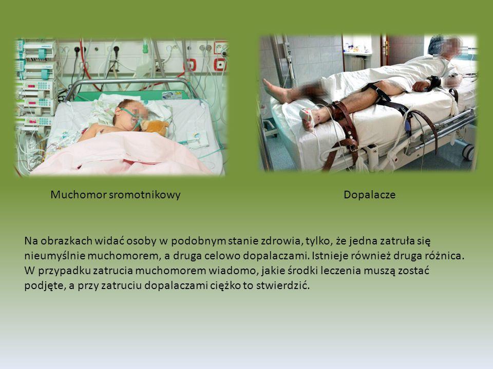 Na obrazkach widać osoby w podobnym stanie zdrowia, tylko, że jedna zatruła się nieumyślnie muchomorem, a druga celowo dopalaczami.