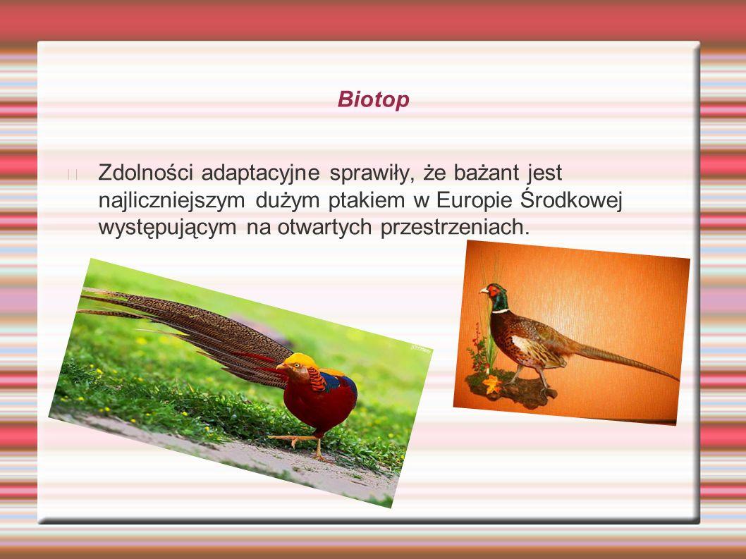 Biotop Zdolności adaptacyjne sprawiły, że bażant jest najliczniejszym dużym ptakiem w Europie Środkowej występującym na otwartych przestrzeniach.