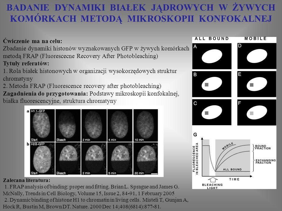 TRÓJWYMIAROWE OBRAZOWANIE KOMÓREK METODĄ MIKROSKOPII KONFOKALNEJ Ćwiczenie ma na celu: wykonanie trójwymiarowego obrazowania komórek metodą mikroskopii konfokalnej - porównanie z możliwościami mikroskopu fluorescecnyjnego szerokiego pola Tytuły referatów: 1.