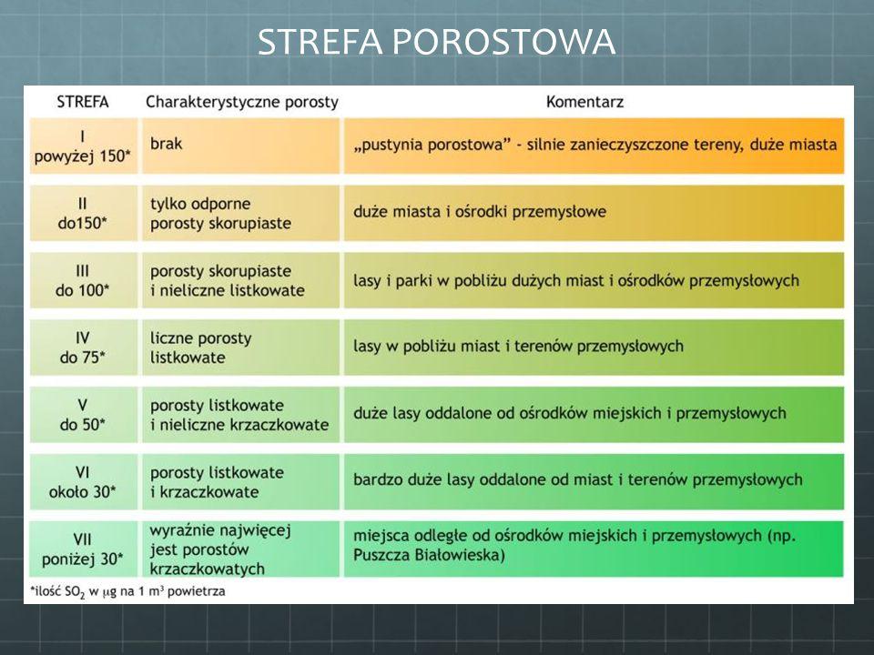 STREFA POROSTOWA