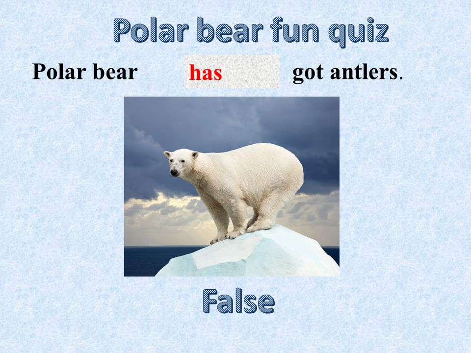has got antlers.Polar bear