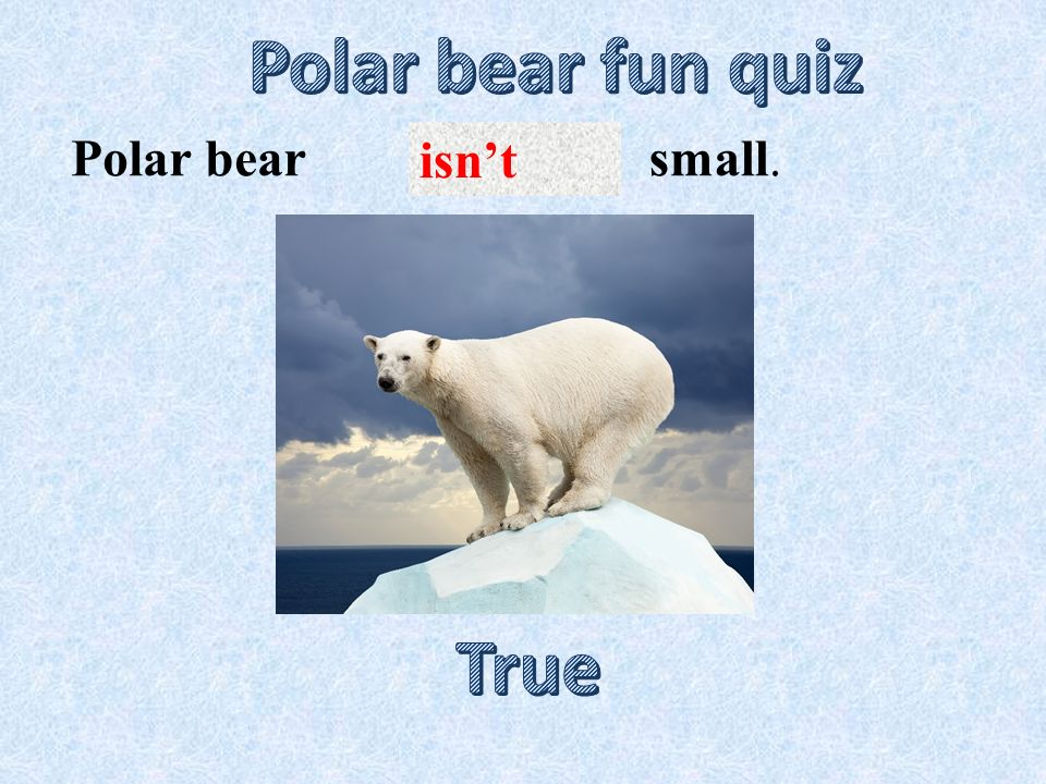isn't small.Polar bear