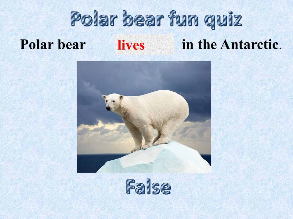 lives in the Antarctic.Polar bear