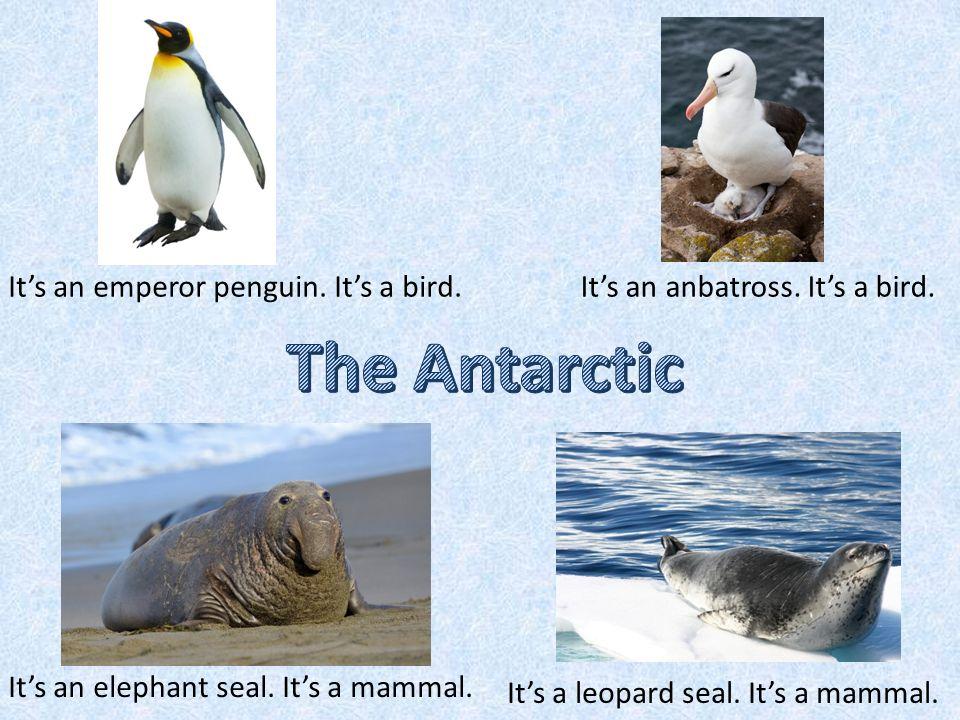 The ArcticThe Antarctic A POLAR BEAR A PINGUIN A CARIBOU A WALRUS AN ALBATROSS AN ELEPHANT SEAL A LEOPARD SEAL A SNOWY OWL