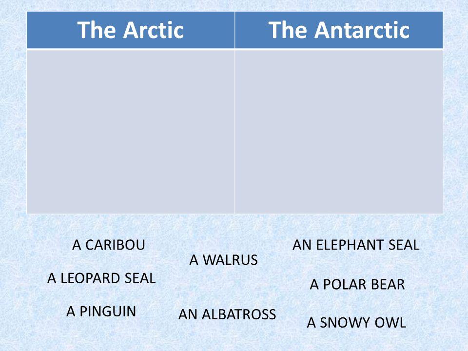 can't fly.Polar bear