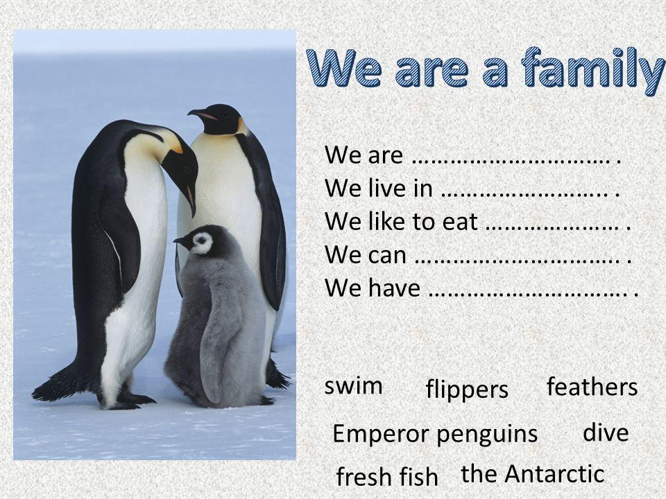 lives in the Antarctic.Polar bear