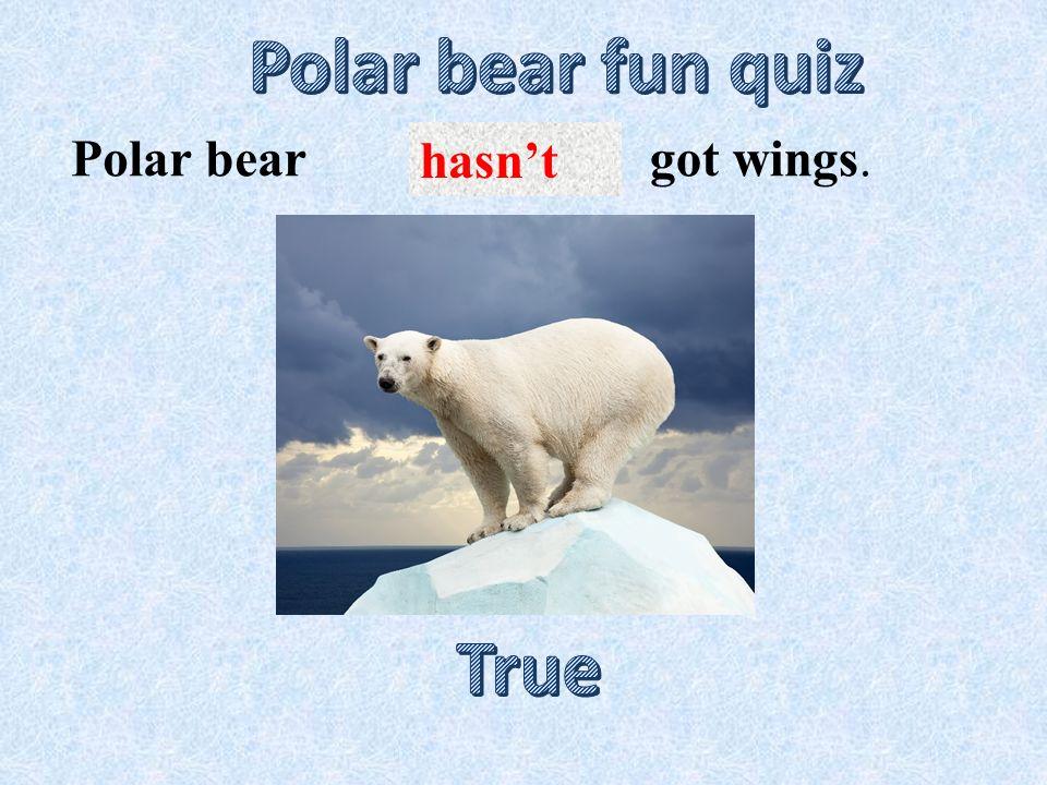 eats plants.Polar bear