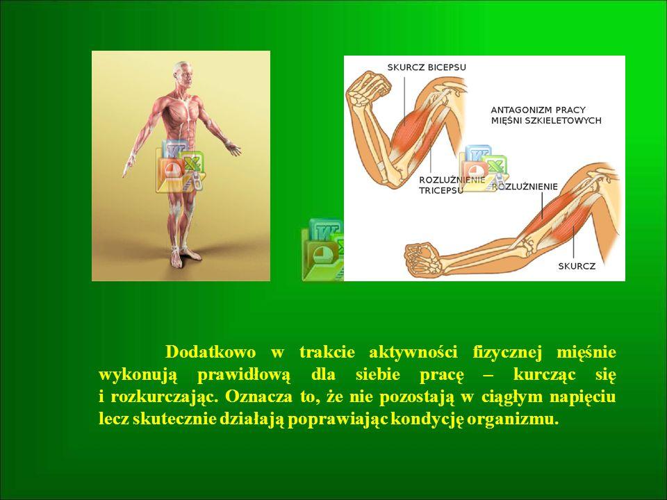 Dodatkowo w trakcie aktywności fizycznej mięśnie wykonują prawidłową dla siebie pracę – kurcząc się i rozkurczając.