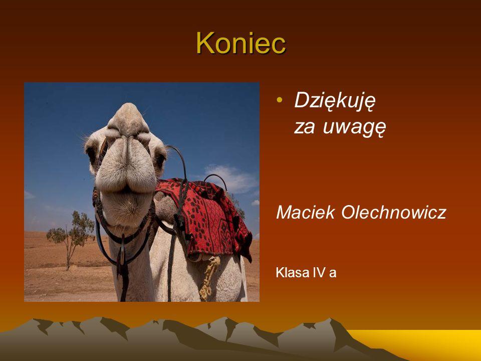 Koniec Dziękuję za uwagę Maciek Olechnowicz Klasa IV a