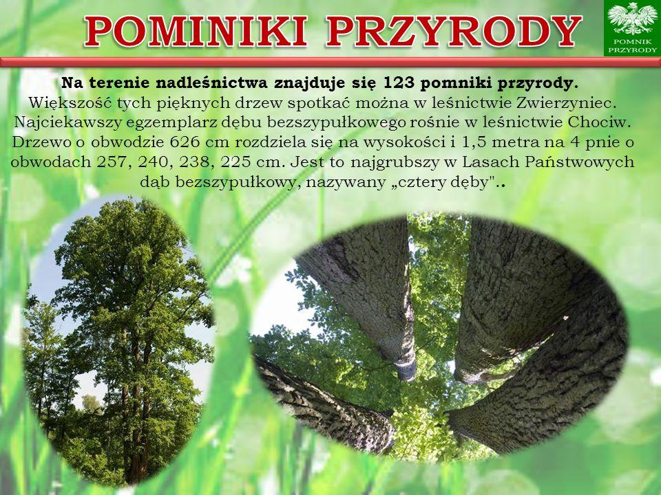 Na terenie nadleśnictwa znajduje się 123 pomniki przyrody. Większość tych pięknych drzew spotkać można w leśnictwie Zwierzyniec. Najciekawszy egzempla