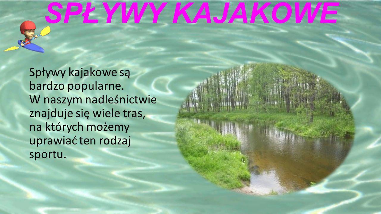 SPŁYWY KAJAKOWE Spływy kajakowe są bardzo popularne.