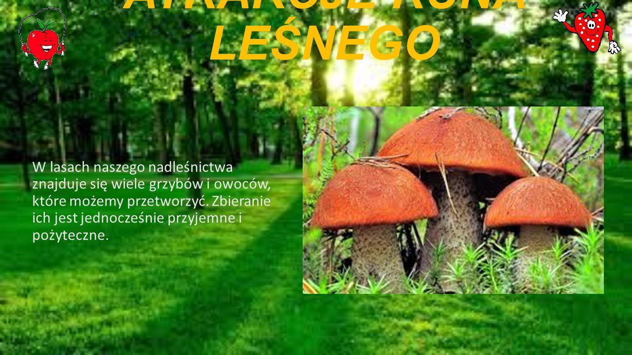 ATRAKCJE RUNA LEŚNEGO W lasach naszego nadleśnictwa znajduje się wiele grzybów i owoców, które możemy przetworzyć.