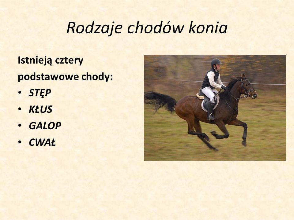 Rodzaje chodów konia Istnieją cztery podstawowe chody: STĘP KŁUS GALOP CWAŁ