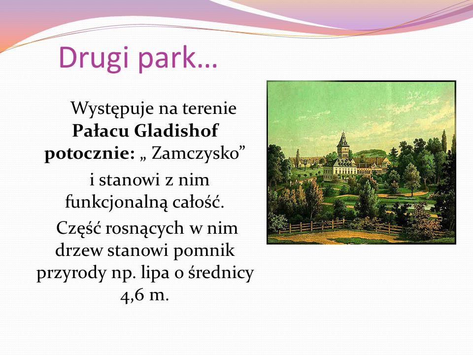 """Drugi park… Występuje na terenie Pałacu Gladishof potocznie: """" Zamczysko i stanowi z nim funkcjonalną całość."""