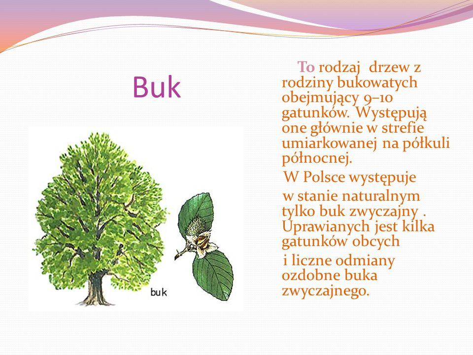 Buk To rodzaj drzew z rodziny bukowatych obejmujący 9–10 gatunków.