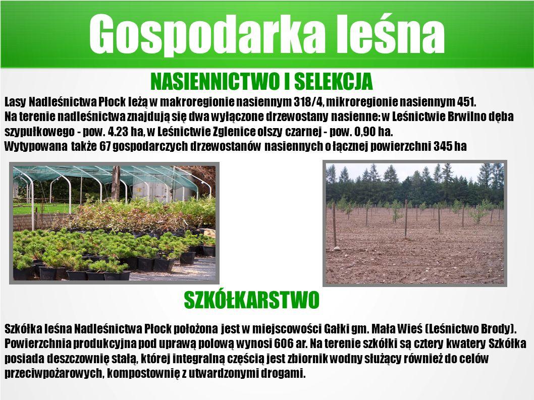 Gospodarka leśna NASIENNICTWO I SELEKCJA Lasy Nadleśnictwa Płock leżą w makroregionie nasiennym 318/4, mikroregionie nasiennym 451.