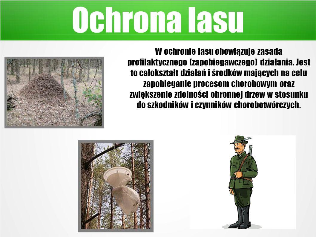 Ochrona lasu W ochronie lasu obowiązuje zasada profilaktycznego (zapobiegawczego) działania.