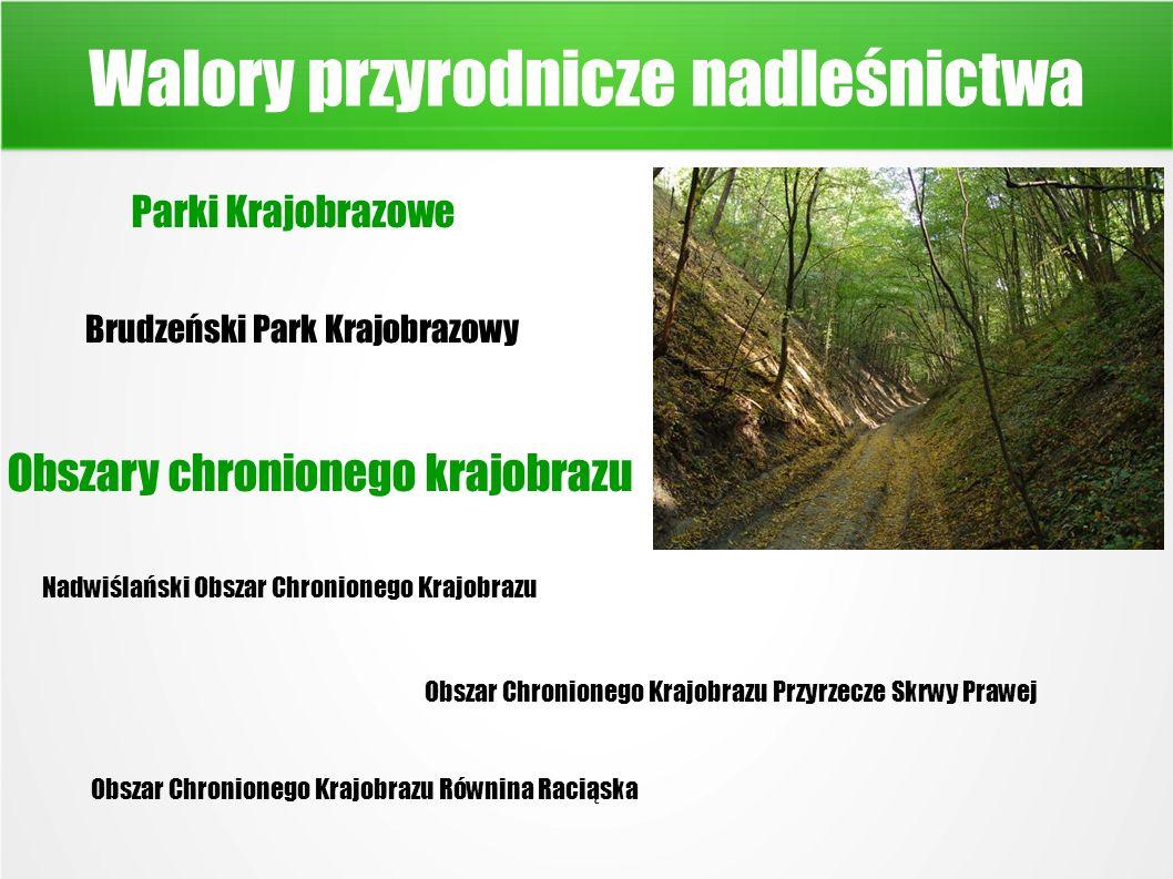 Walory przyrodnicze nadleśnictwa Parki Krajobrazowe Brudzeński Park Krajobrazowy Obszary chronionego krajobrazu Nadwiślański Obszar Chronionego Krajobrazu Obszar Chronionego Krajobrazu Przyrzecze Skrwy Prawej Obszar Chronionego Krajobrazu Równina Raciąska