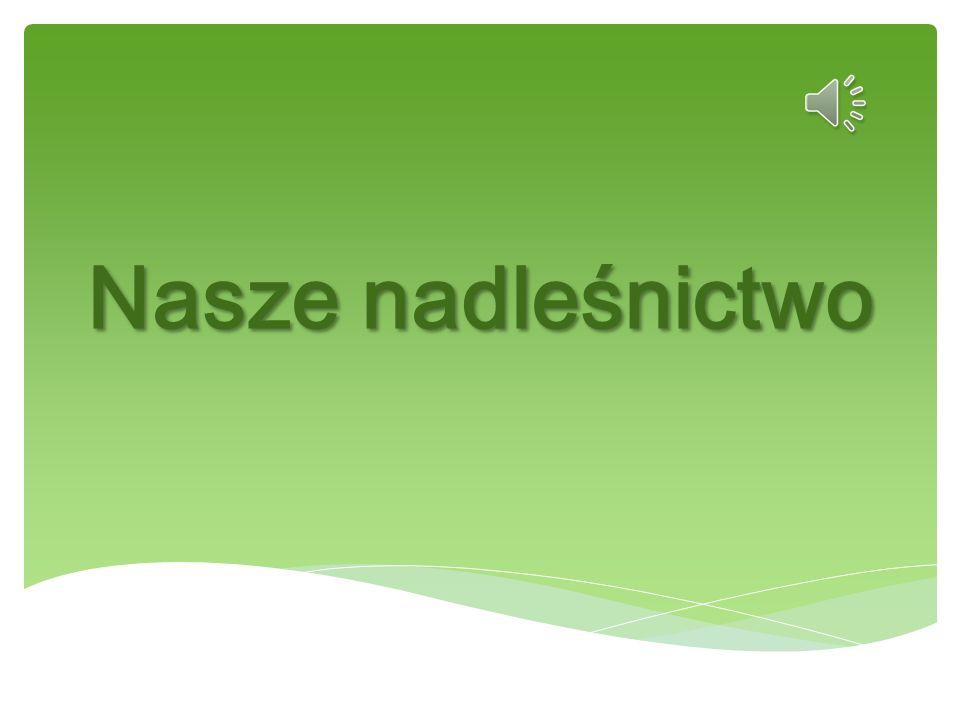 Wykonały: Karolina Jarecka, Julia Soszyńska, Julia Musidlak Gimnazjum im.