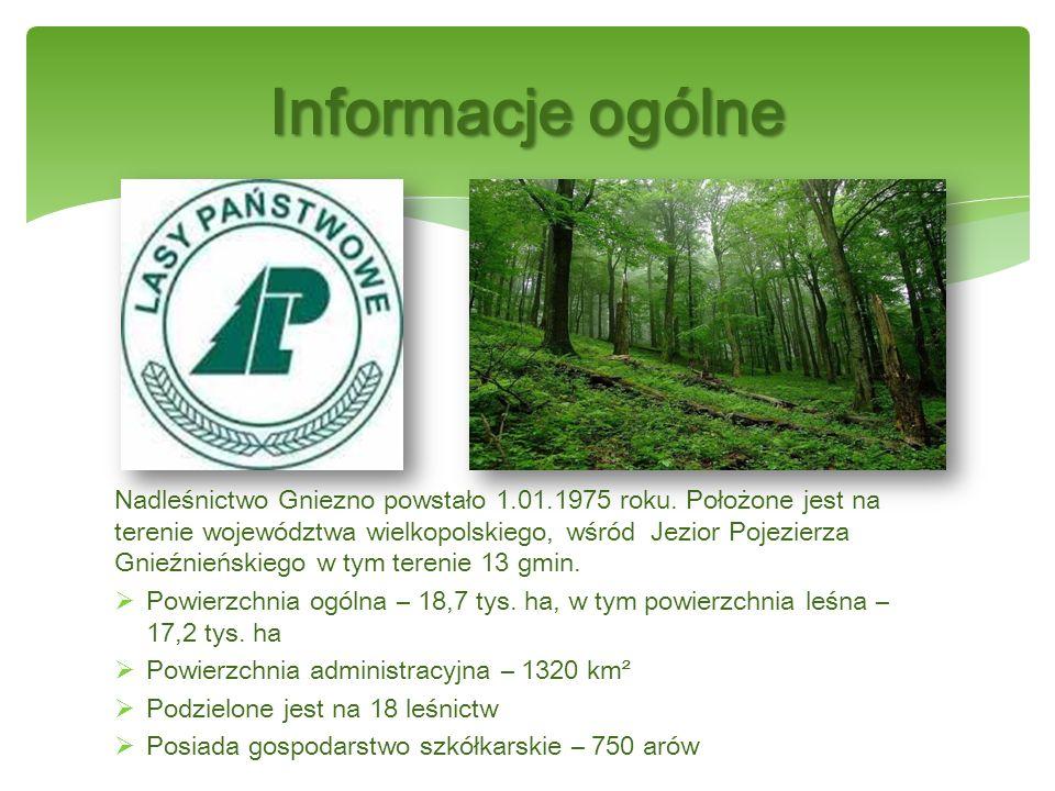 Nadleśnictwo Gniezno powstało 1.01.1975 roku.