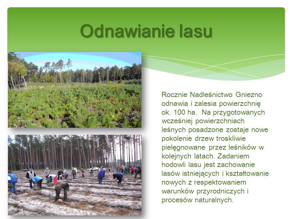 Hodowla lasu obejmuje zbiór i przechowywanie nasion drzew, produkcję sadzonek na szkółkach, zakładanie, pielęgnację i ochronę upraw leśnych oraz drzewostanów.