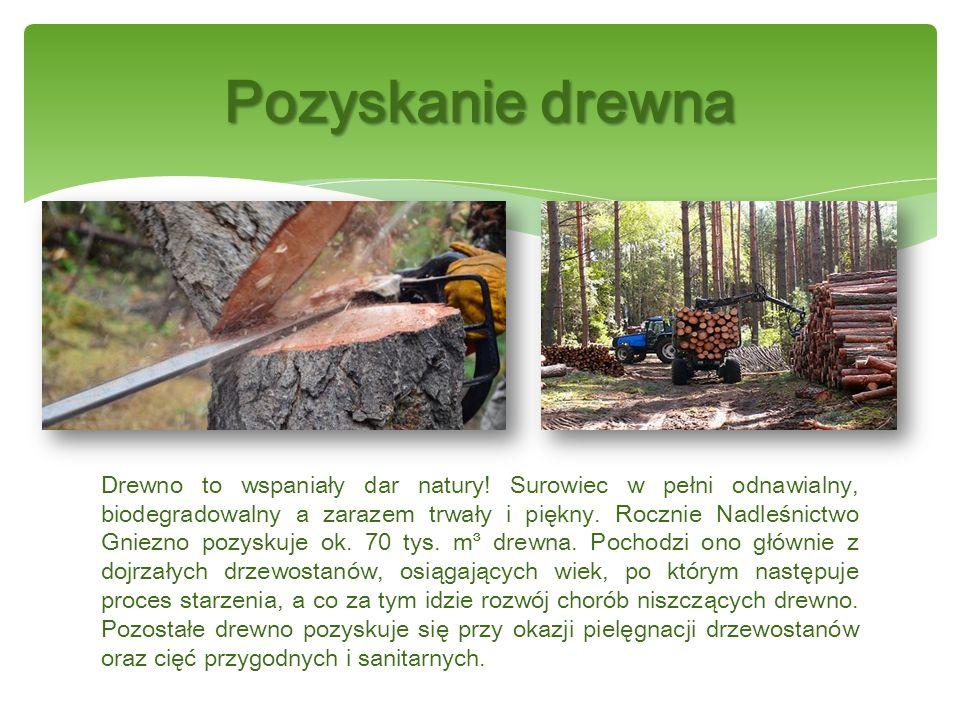 Baza nasienna nadleśnictwa w pełni pokrywa zapotrzebowanie na podstawowe gatunki lasotwórcze.