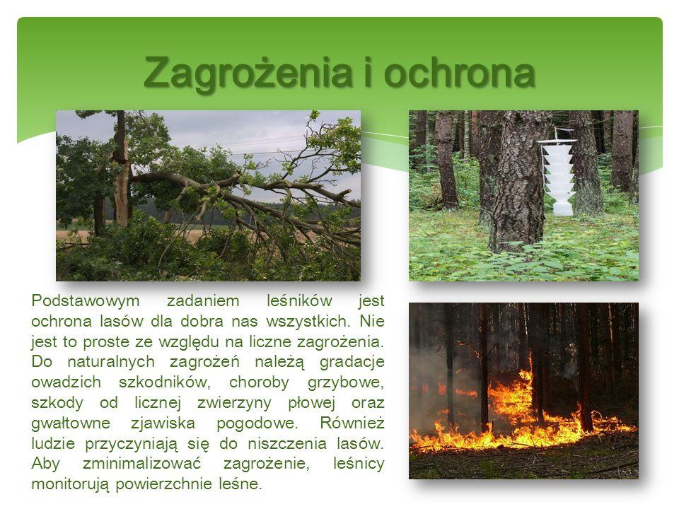 Drewno to wspaniały dar natury.