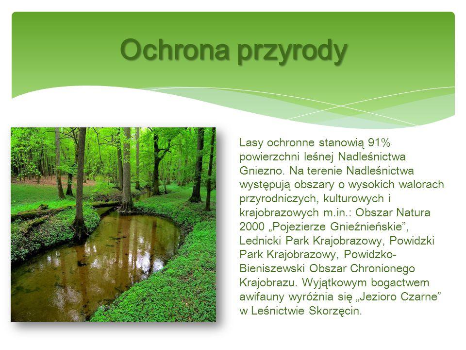 Lasy ochronne stanowią 91% powierzchni leśnej Nadleśnictwa Gniezno.