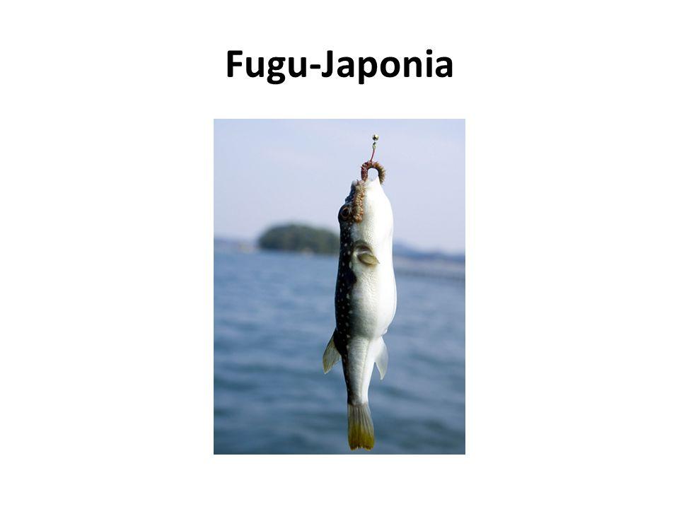 Fugu-Japonia