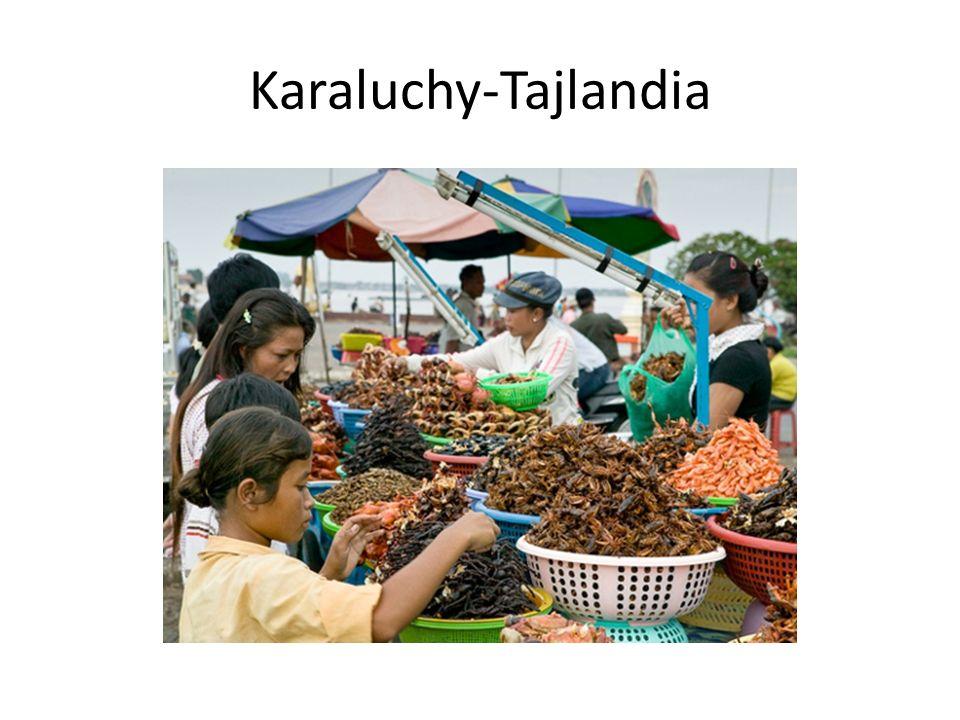 Karaluchy-Tajlandia