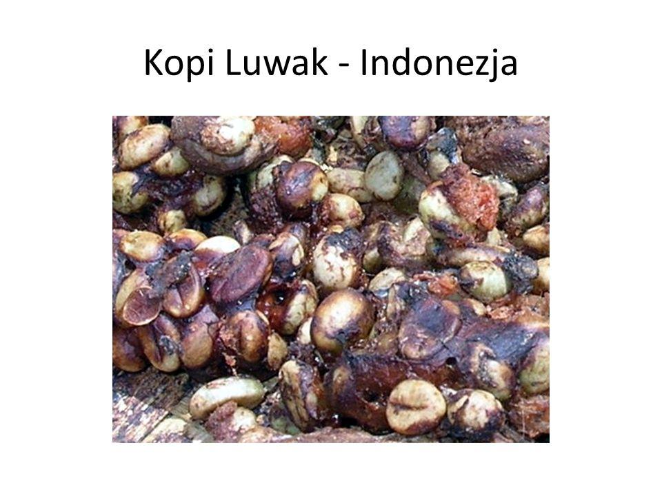 Kopi Luwak - Indonezja