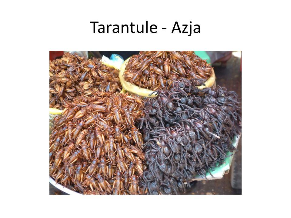 Tarantule - Azja