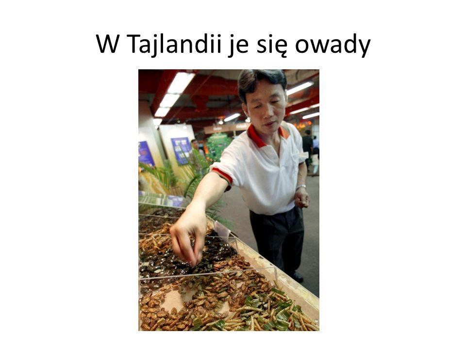 W Tajlandii je się owady