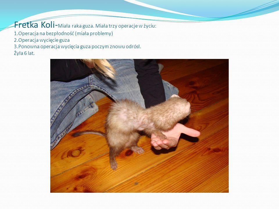 Kot Mendi- Biec przez ulicę potknęła się o wysoką studzienkę. Poczym złamała obie przednie łapy.