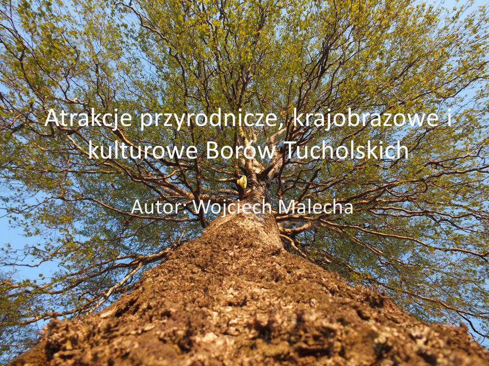 Atrakcje przyrodnicze, krajobrazowe i kulturowe Borów Tucholskich Autor: Wojciech Malecha