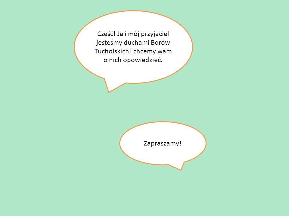 Cześć. Ja i mój przyjaciel jesteśmy duchami Borów Tucholskich i chcemy wam o nich opowiedzieć.