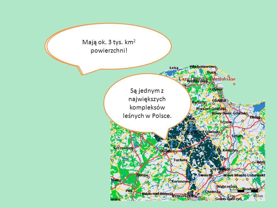 Na tej mapie Bory Tucholskie zaznaczone są kolorem granatowym.
