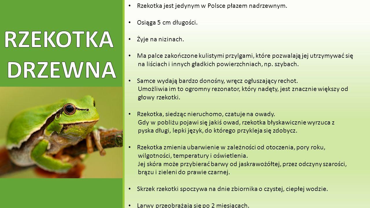 Rzekotka jest jedynym w Polsce płazem nadrzewnym. Osiąga 5 cm długości. Żyje na nizinach. Ma palce zakończone kulistymi przylgami, które pozwalają jej